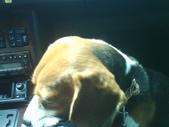 我的狗兒子:1158622062.jpg