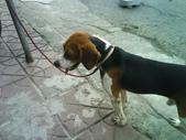 我的狗兒子:1158622063.jpg