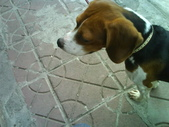 我的狗兒子:1158622064.jpg