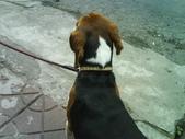 我的狗兒子:1158622065.jpg