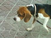 我的狗兒子:1158622066.jpg