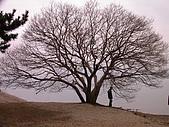 2004日本賞櫻行:DSCN2754