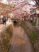 2004日本賞櫻行:DSCN2765