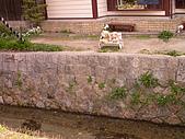 2004日本賞櫻行:DSCN2768