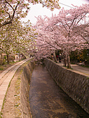 2004日本賞櫻行:DSCN2775