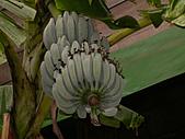 2005.12.11-綠世界一日遊:DSCN3577