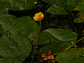 2005.12.11-綠世界一日遊:DSCN3587