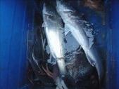 馬祖船老大民宿/釣場漁獲照片:1755197000.jpg
