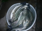 馬祖船老大民宿/釣場漁獲照片:1755197012.jpg