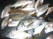 馬祖船老大民宿/12月鱸魚來了:1628200812.jpg
