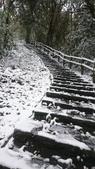 2016 旅遊:160124 大山背賞雪-096.JPG