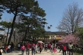 2016 旅遊:160228 麗池賞櫻-048.JPG