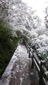 2016 旅遊:160124 大山背賞雪-042.JPG