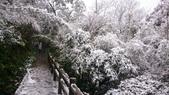 2016 旅遊:160124 大山背賞雪-043.JPG