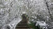 2016 旅遊:160124 大山背賞雪-056.JPG