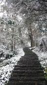 2016 旅遊:160124 大山背賞雪-039.JPG