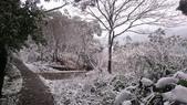 2016 旅遊:160124 大山背賞雪-082.JPG
