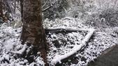 2016 旅遊:160124 大山背賞雪-049.JPG