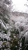 2016 旅遊:160124 大山背賞雪-044.JPG