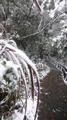 2016 旅遊:160124 大山背賞雪-092.JPG