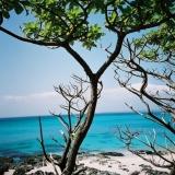 墾丁-白天:墾丁的白水木