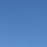 墾丁-白天:展翅飛翔的國慶鳥「灰面鷲」