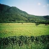墾丁-白天:牡丹的白鷺鷥