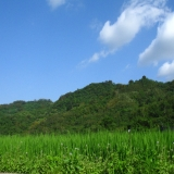 台東-白天:197公路往電光小村途中