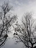 2008鼠於濃春─生祥&大竹研:DSC00345.jpg