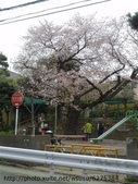 【2013東京賞花】 Day2:櫻花滿開的小公園 又讓我們相機失控了