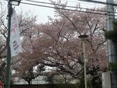【2013東京賞花】 Day2:
