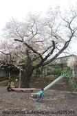 【2013東京賞花】 Day2:真的是很小的公園~就上張照片的盪鞦韆+這張照片