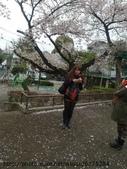 【2013東京賞花】 Day2:瘋狂跟櫻花合照時間