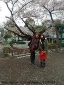 【2013東京賞花】 Day2:好想買杯熱咖啡來這個小公園作著發呆