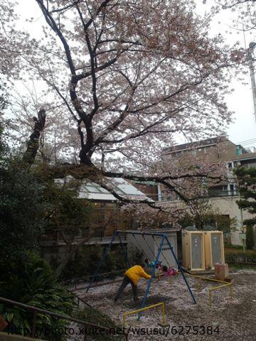 【2013東京賞花】 Day2:這對小朋友盪鞦韆盪超久...