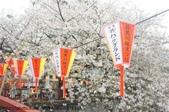 【2013東京賞花】 Day2:因為櫻花太早開 被打亂的桜祭り