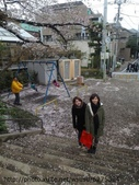【2013東京賞花】 Day2:只能拍拍滿地櫻花~