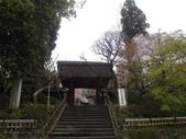 【2013東京賞花】 Day2:門邊微微看到裡面的櫻花
