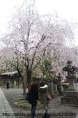 【2013東京賞花】 Day2:劉哈拍照的成果等下呈現