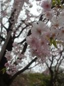 【2013東京賞花】 Day2:這張才是劉哈要呈現的效果