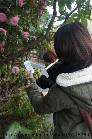 【2013東京賞花】 Day2:兩位很認真在拍花(應該是山茶花吧)