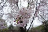 【2013東京賞花】 Day2:粉嫩嫩的櫻花好美~