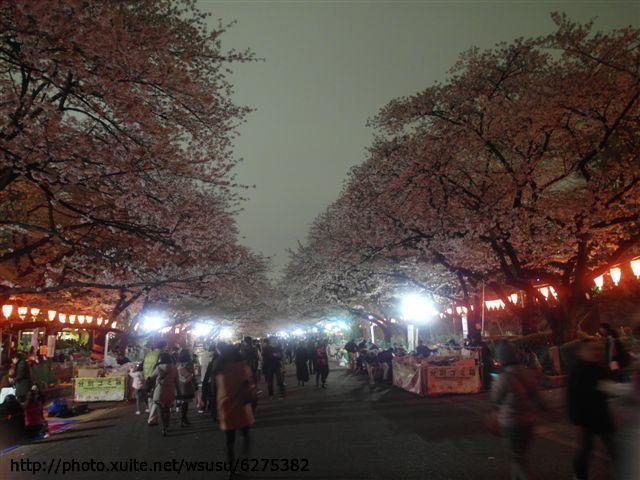 【2013東京賞花】Day1:tokyo day1 (40).JPG