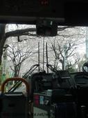 【2013東京賞花】 Day2:到達之前用櫻花隧道歡迎我們