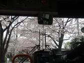 【2013東京賞花】 Day2:這邊的櫻花是這幾天看到開的最漂亮的