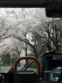 【2013東京賞花】 Day2:是不是很美~不過同車的日本仔都很冷靜,應該是看習慣了XD
