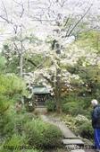 【2013東京賞花】 Day2:白白的是櫻花 但我不小心調太亮...