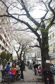 【2013東京賞花】 Day2:自由之丘的櫻花街道