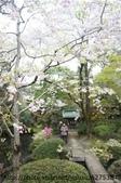 【2013東京賞花】 Day2:失敗作品之二....重點是老夫婦