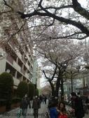 【2013東京賞花】 Day2:可惜都長了點綠葉了